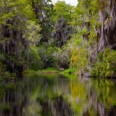 Visiting the Okefenokee Swamp