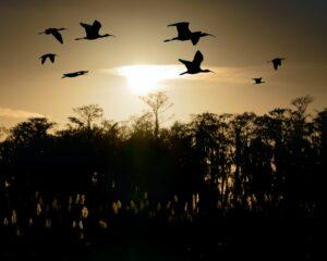 everglades birdwatching