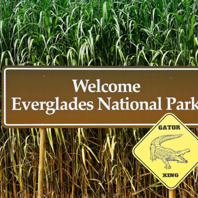 Visiting the Everglades