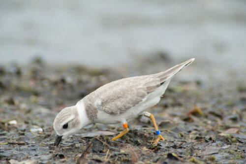 beach birding