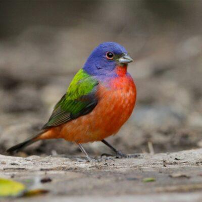 Birding and Birdwatching: Basics and Gear